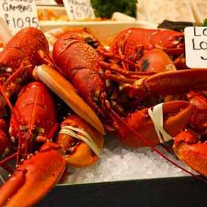 Cooked lobsters display on ice