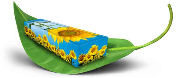 Green sunflower casket on leaf for Green Burial