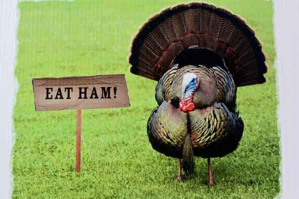 "Thanksgiving turkey with a sign saying ""Eat Ham"""