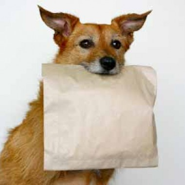 Dog with leftover food bag
