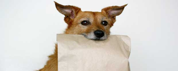 Dog with leftover food bag