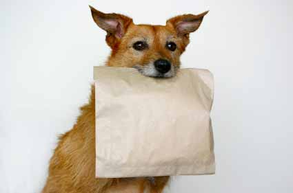 Dog With Doggie Bag To Bring Home Eftover Food From Restaurant