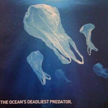 The Ocean's Deadliest Predator Project AWARE Foundation