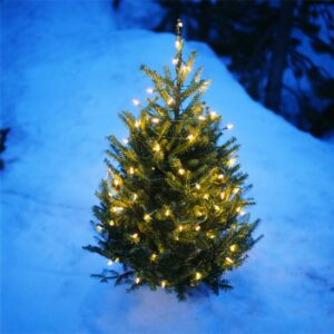 No-Waste Holiday Outdoor Christmas Tree