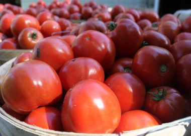 Fresh plump tomatoes in baskets