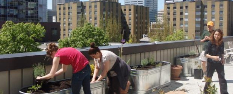 Composting on an urban terrace provides nutrient-rich soil for plants
